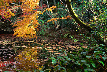 feuilles-bassin