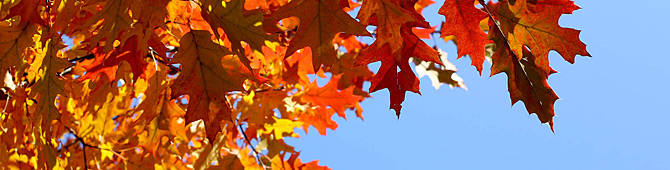Autumn-leaves-background-1426845850_30