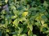 Planter sous les arbres, à l'ombre et en sol sec