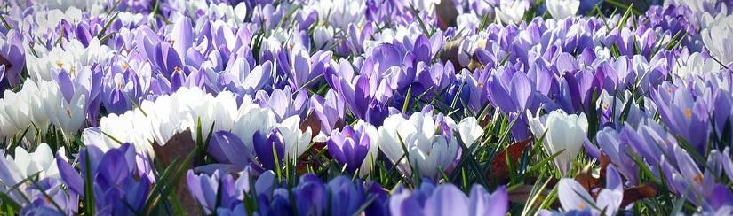 Travaux du jardin en avril