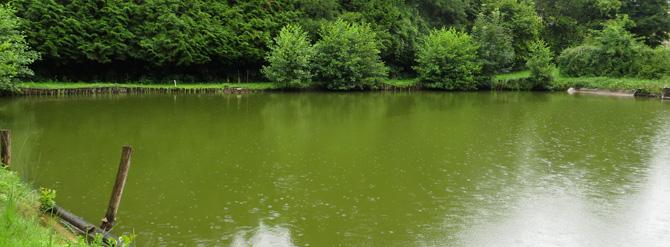 Analyse d'eau – mesurer les pesticides dans son étang, rivière, puits…